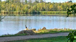 Gentofte Søen